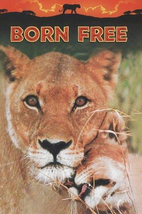 poster for Born Free