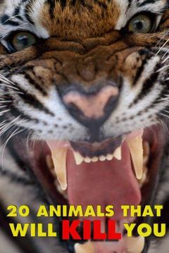 poster for 20 Animals That Will Kill You