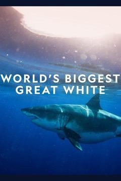 poster for World's Biggest Great White?