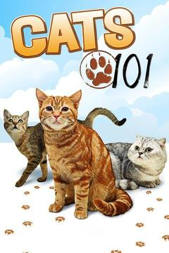 poster for Cats 101
