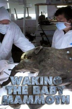 poster for Waking the Baby Mammoth