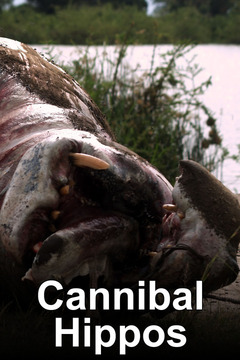 poster for Cannibal Hippos