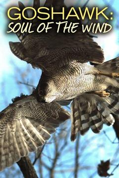 poster for Goshawk: Soul of the Wind