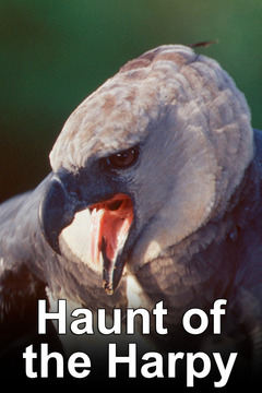 poster for Haunt of the Harpy