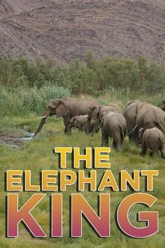 poster for The Elephant King